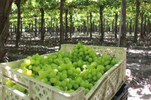 Simposio Internacional de uva de mesa @ Casa Piedra