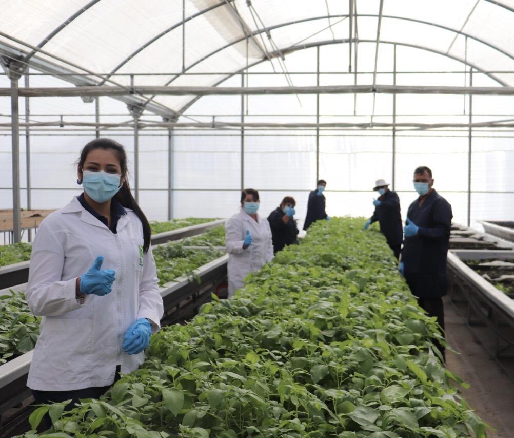 Centro Regional de la Papa de INIA se prepara para continuar con el escalamiento de semilla certificada