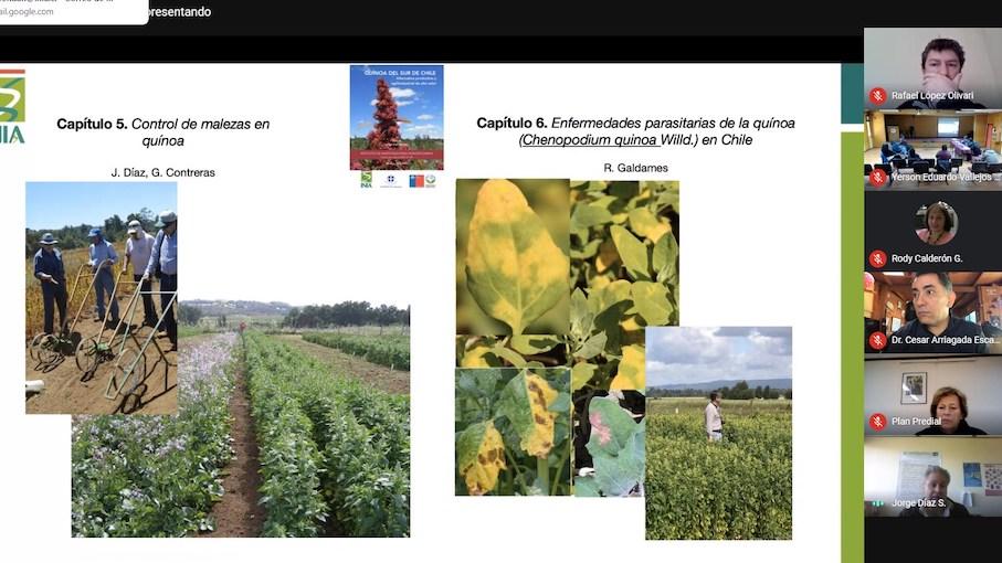 En Webinar se presenta libro de la Quínoa generado en INIA Carillanca