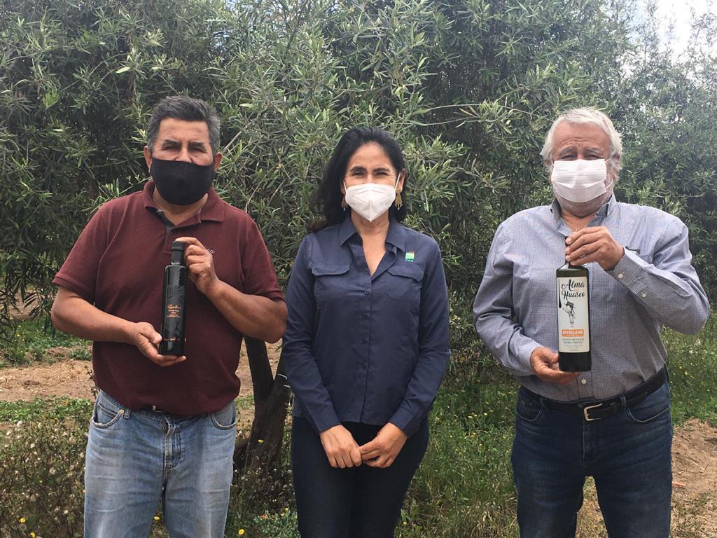 Dos productores de aceite de oliva del Valle de Huasco, apoyados por INIA Intihuasi, son calificados dentro de los 10 mejores a nivel nacional