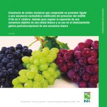 17. Regulación de la expresión de genes en plantas